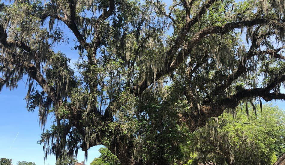 tree-appraisal-service