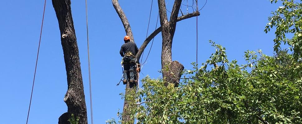 tree-care-maintenance-hero-alt (1)