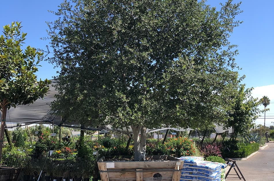 tree-inventory-service