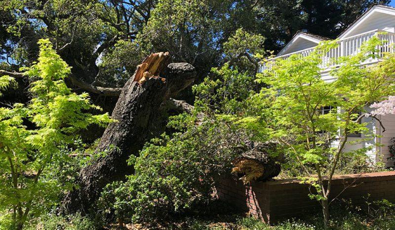 tree-risk-assesment-service