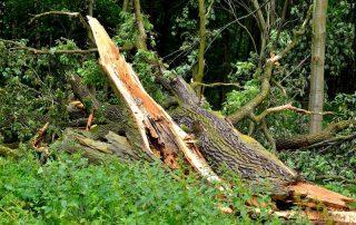 what-to-do-tree-struck-lightning