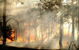 fire-mitigation-services