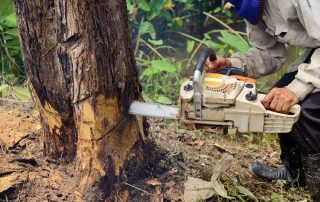 local-tree-removal-service-expert-chainsaw