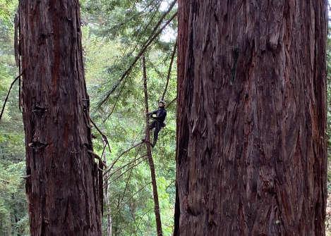 NPC-Redwood-Climb